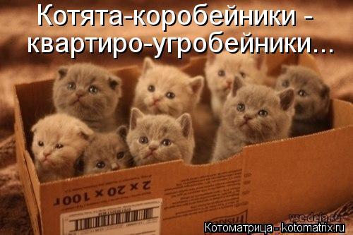 Котоматрица: Котята-коробейники -  квартиро-угробейники...