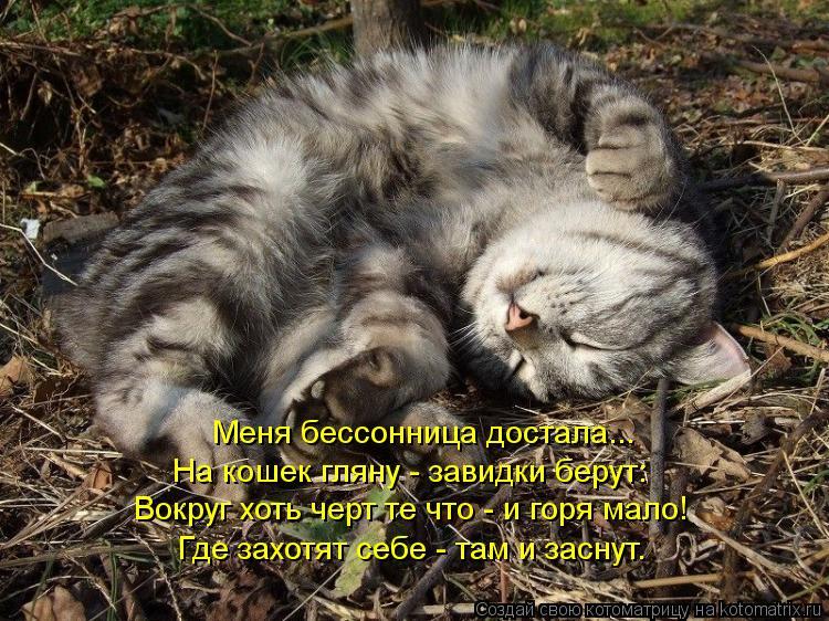 Котоматрица: Меня бессонница достала... На кошек гляну - завидки берут: Вокруг хоть черт те что - и горя мало! Где захотят себе - там и заснут.