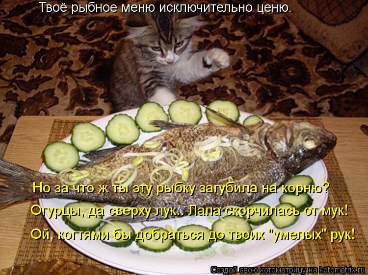 """Котоматрица: Твоё рыбное меню исключительно ценю. Но за что ж ты эту рыбку загубила на корню? Ой, когтями бы добраться до твоих """"умелых"""" рук! Огурцы, да све"""