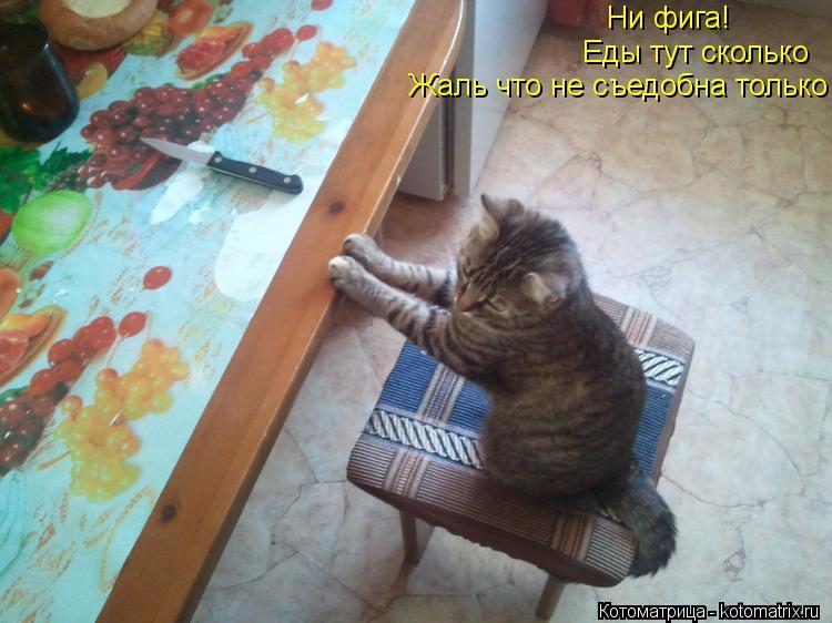 Котоматрица: Ни фига! Еды тут сколько Жаль что не съедобна только