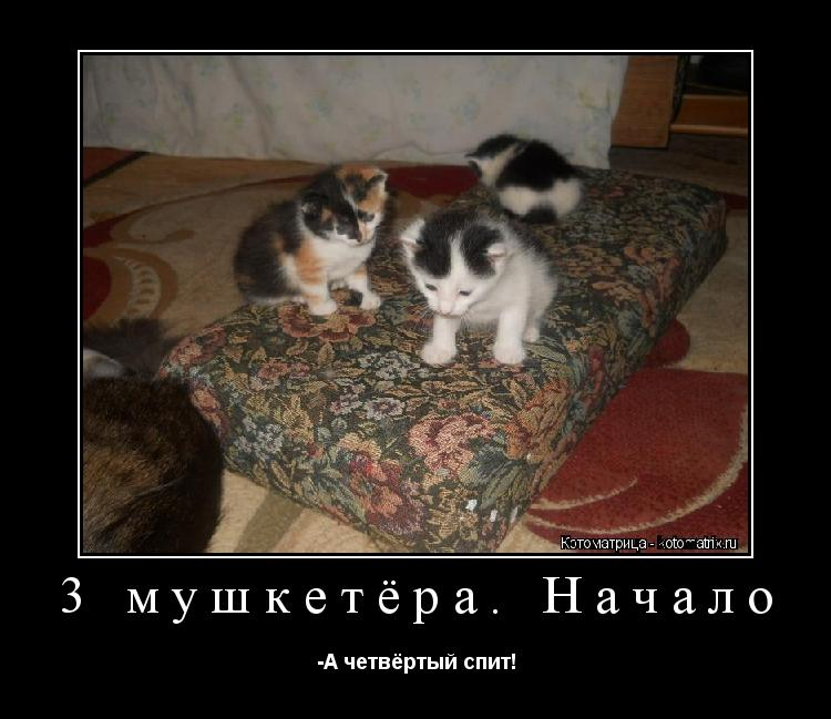 Котоматрица: 3 мушкетёра. Начало -А четвёртый спит!