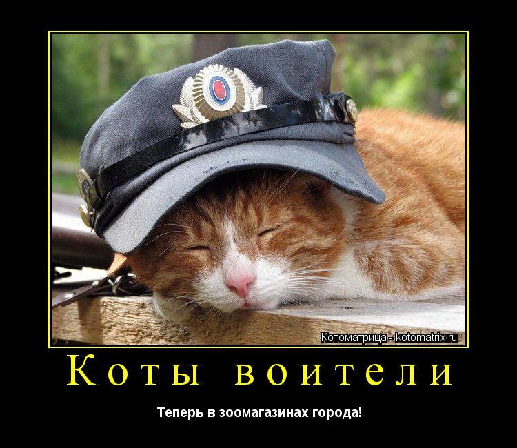 Котоматрица: Коты воители Теперь в зоомагазинах города!