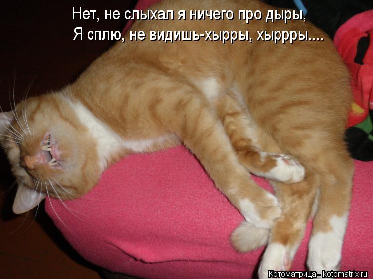 Котоматрица: Нет, не слыхал я ничего про дыры, Я сплю, не видишь-хырры, хыррры....