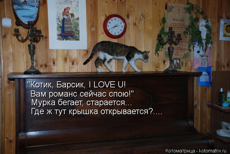 """Котоматрица: """"Котик, Барсик, I LOVE U! Вам романс сейчас спою!"""" Мурка бегает, старается... Где ж тут крышка открывается?...."""