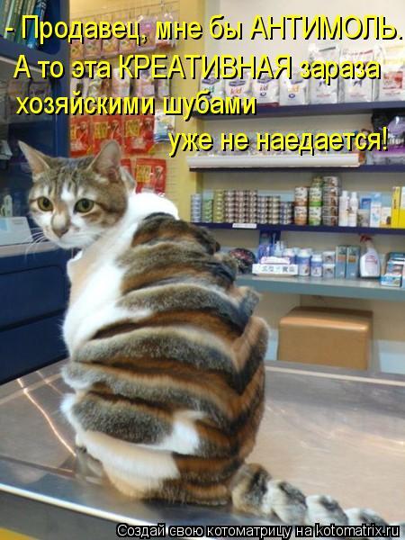 Котоматрица: - Продавец, мне бы АНТИМОЛЬ. А то эта КРЕАТИВНАЯ зараза хозяйскими шубами  уже не наедается!