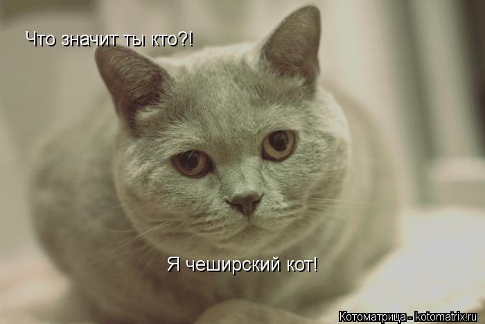 Котоматрица: Что значит ты кто?! Я чеширский кот!