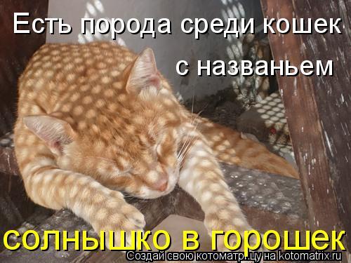 Котоматрица: Есть порода среди кошек с названьем солнышко в горошек