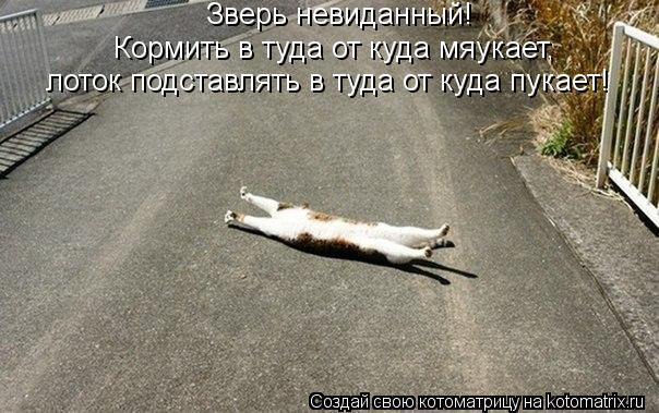 Котоматрица: Зверь невиданный!  Кормить в туда от куда мяукает,  лоток подставлять в туда от куда пукает!