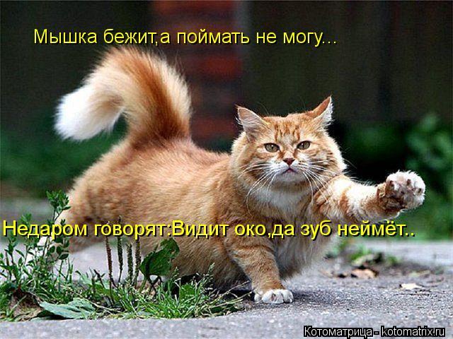 Котоматрица: Мышка бежит,а поймать не могу... Недаром говорят:Видит око,да зуб неймёт..
