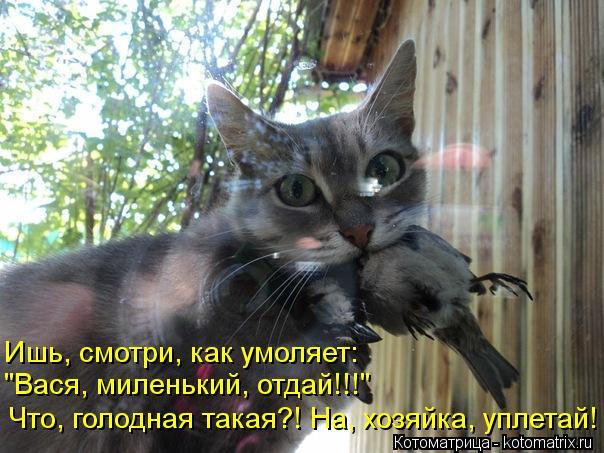 """Котоматрица: Что, голодная такая?! На, хозяйка, уплетай! """"Вася, миленький, отдай!!!"""" Ишь, смотри, как умоляет:"""