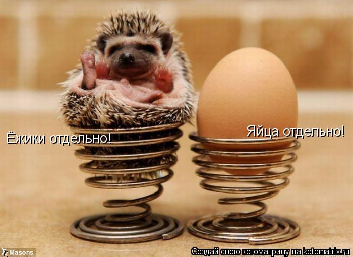 Котоматрица: Ёжики отдельно! Яйца отдельно!