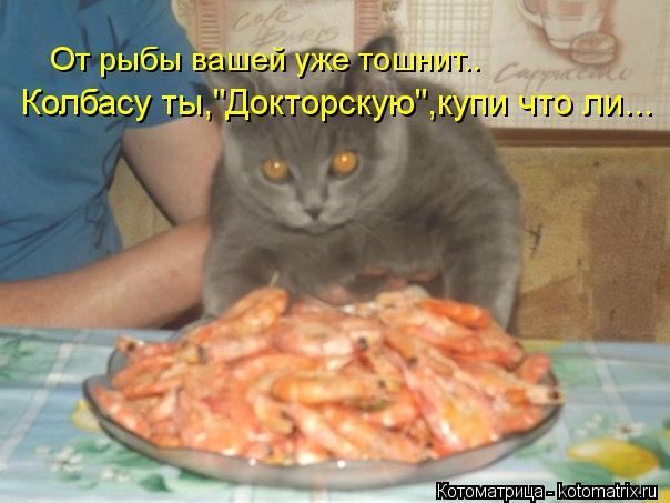 """Котоматрица: От рыбы вашей уже тошнит.. Колбасу ты,""""Докторскую"""",купи что ли..."""