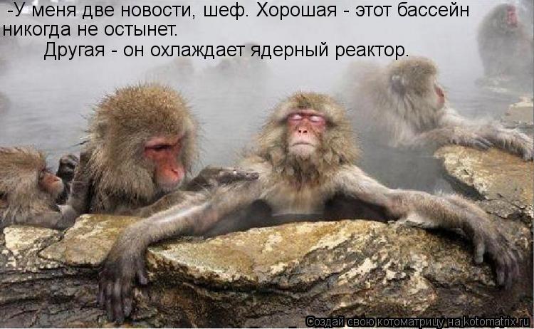 Котоматрица: -У меня две новости, шеф. Хорошая - этот бассейн никогда не остынет. Другая - он охлаждает ядерный реактор.