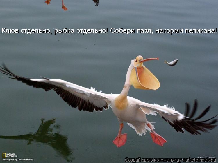 Котоматрица: Клюв отдельно, рыбка отдельно! Собери пазл, накорми пеликана!