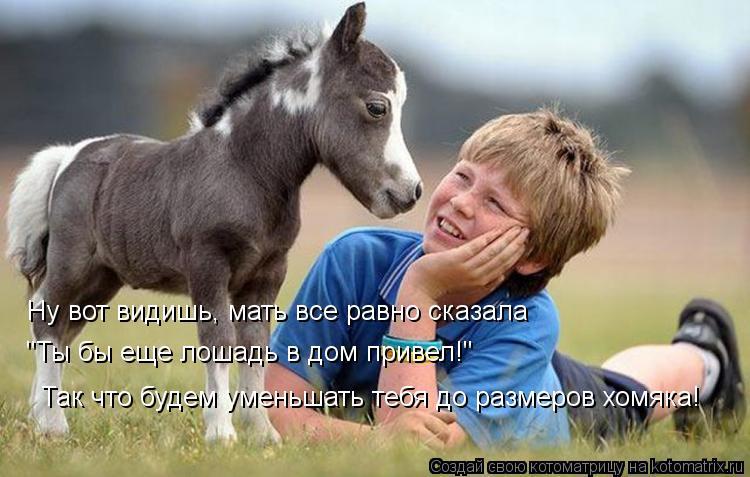 """Котоматрица: Ну вот видишь, мать все равно сказала  """"Ты бы еще лошадь в дом привел!"""" Так что будем уменьшать тебя до размеров хомяка!"""