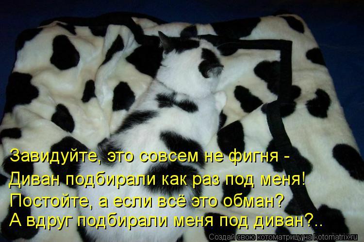 Котоматрица: А вдруг подбирали меня под диван?.. Постойте, а если всё это обман? Завидуйте, это совсем не фигня - Диван подбирали как раз под меня!