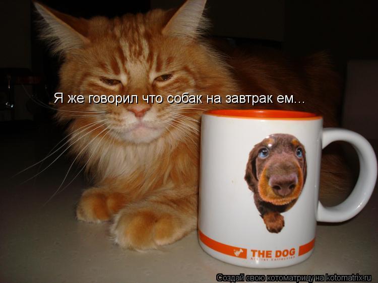 Котоматрица: Я же говорил что собак на завтрак ем...
