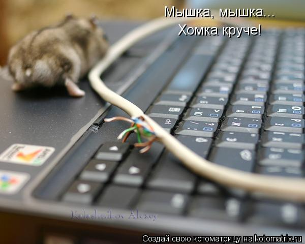 Котоматрица: Мышка, мышка... Хомка круче!