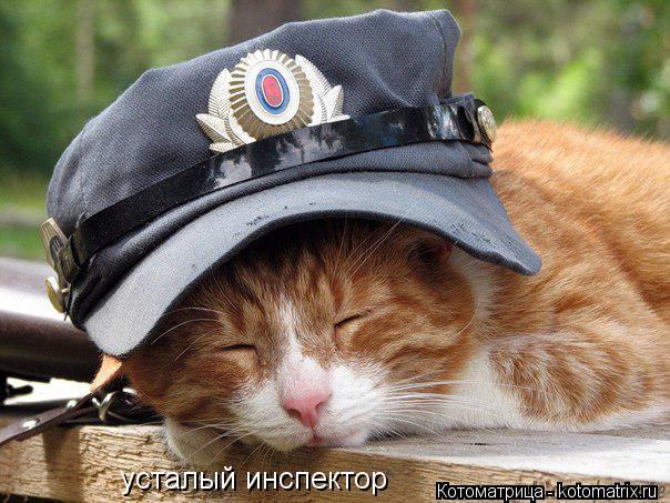 Котоматрица: усталый инспектор