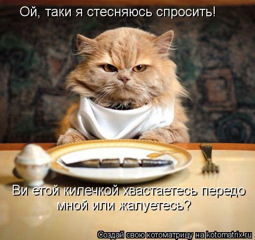 Котоматрица: Ой, таки я стесняюсь спросить!  Ви етой килечкой хвастаетесь передо  мной или жалуетесь?
