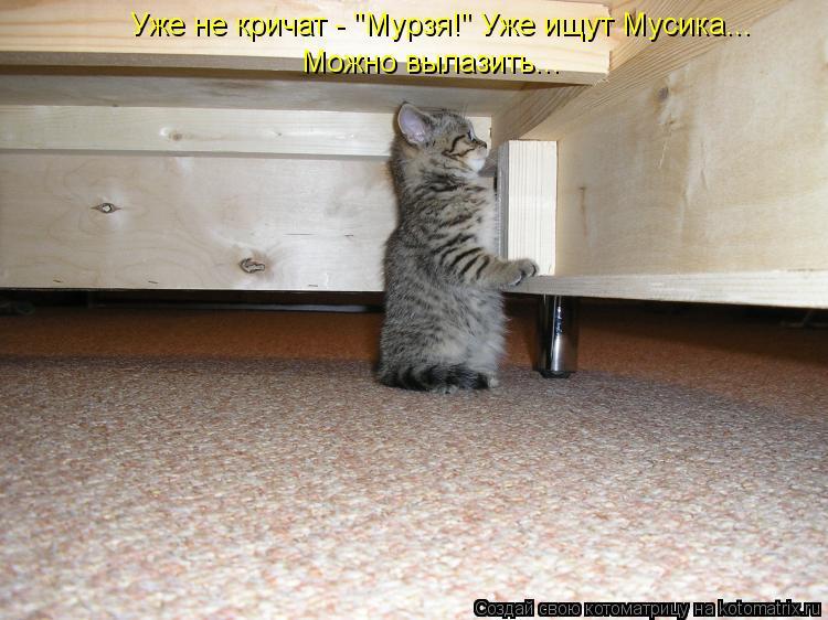 """Котоматрица: Уже не кричат - """"Мурзя!"""" Уже ищут Мусика...  Можно вылазить..."""