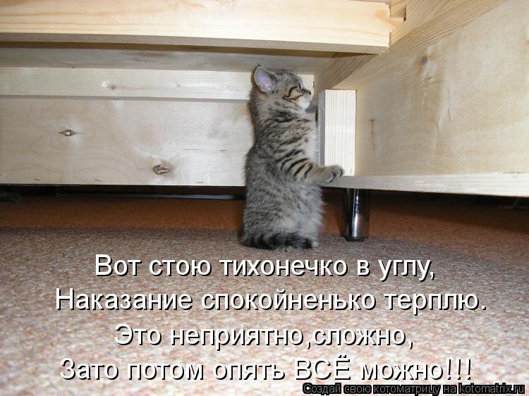 Котоматрица: Вот стою тихонечко в углу, Наказание спокойненько терплю. Это неприятно,сложно, Зато потом опять ВСЁ можно!!!