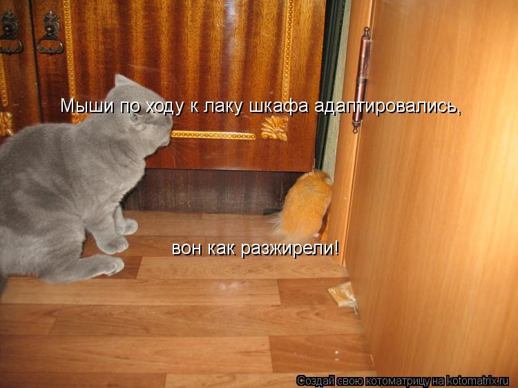 Котоматрица: Мыши по ходу к лаку шкафа адаптировались, вон как разжирели!