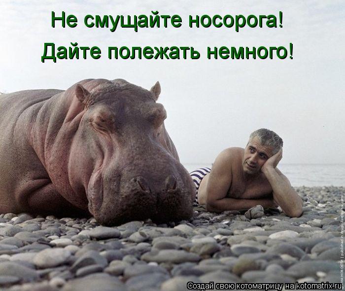 Котоматрица: Не смущайте носорога! Дайте полежать немного!