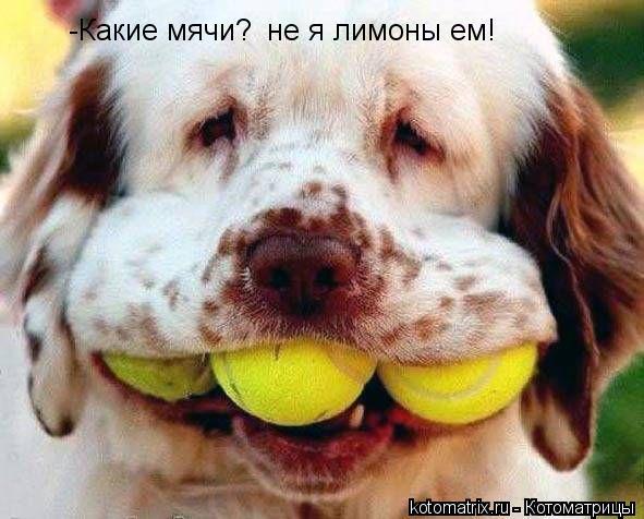 Котоматрица: -Какие мячи? не я лимоны ем!
