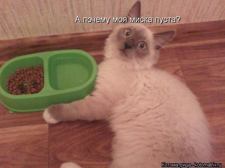Котоматрица: А почему моя миска пуста?
