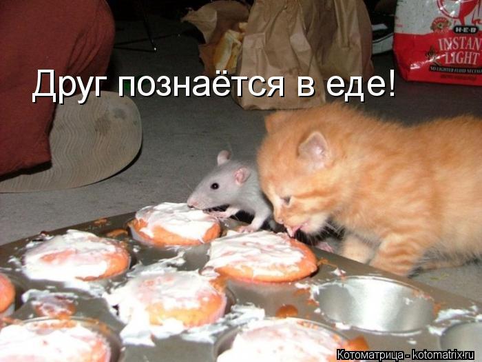 Котоматрица: Друг познаётся в еде!