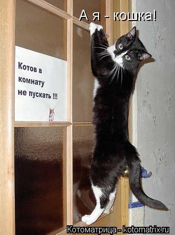 Котоматрица: А я - кошка!