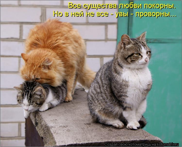 Котоматрица: Все существа любви покорны. Но в ней не все - увы - проворны...