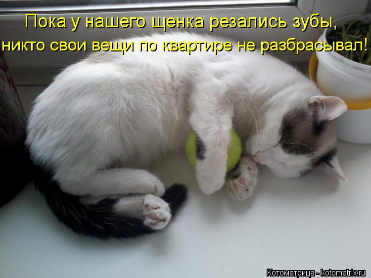 Котоматрица: Пока у нашего щенка резались зубы, никто свои вещи по квартире не разбрасывал!