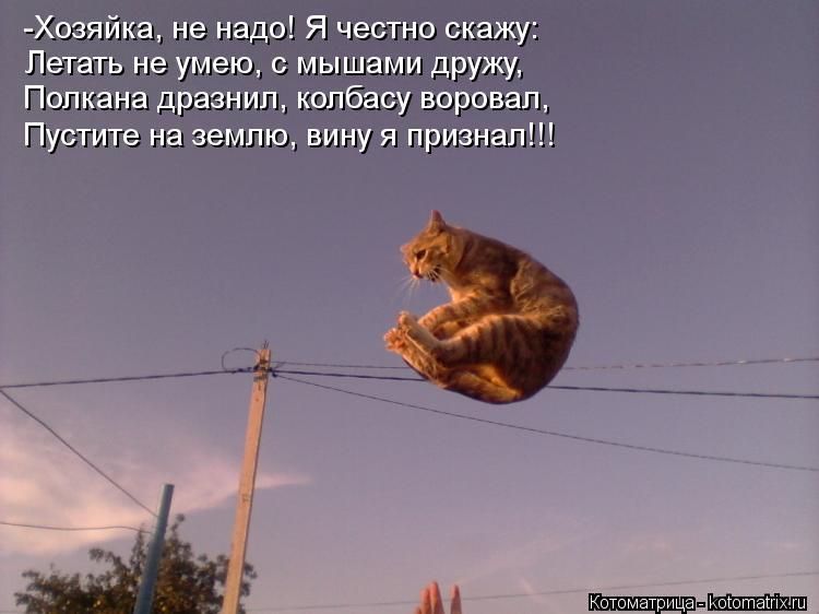 Котоматрица: -Хозяйка, не надо! Я честно скажу: Летать не умею, с мышами дружу, Полкана дразнил, колбасу воровал, Пустите на землю, вину я признал!!!