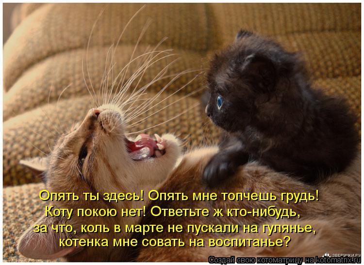 Котоматрица: Опять ты здесь! Опять мне топчешь грудь! котенка мне совать на воспитанье? Коту покою нет! Ответьте ж кто-нибудь, за что, коль в марте не пуска