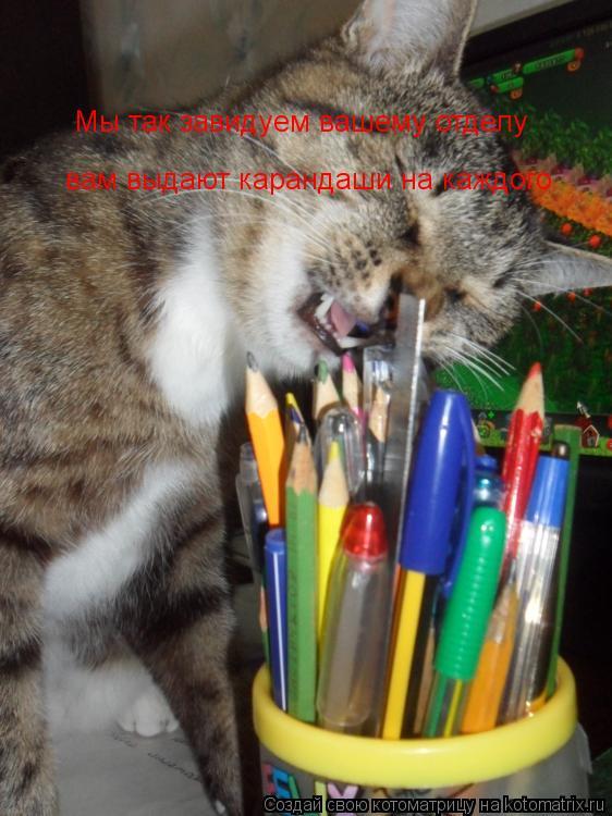 Котоматрица: Мы так завидуем вашему отделу вам выдают карандаши на каждого