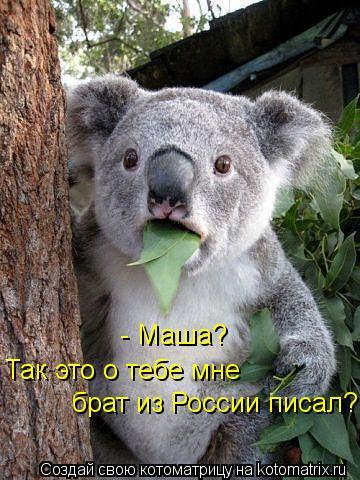 Котоматрица: - Маша? Так это о тебе мне  брат из России писал?