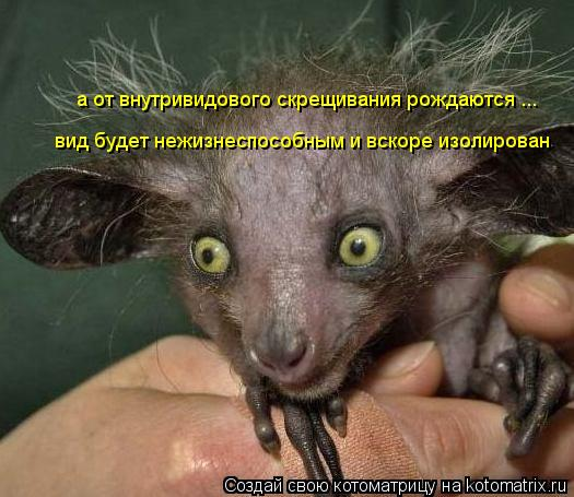 Котоматрица: а от внутривидового скрещивания рождаются ... вид будет нежизнеспособным и вскоре изолирован