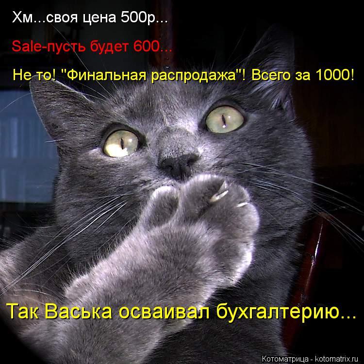 """Котоматрица: Хм...своя цена 500р... Sale-пусть будет 600... Не то! """"Финальная распродажа""""! Всего за 1000! Так Васька осваивал бухгалтерию..."""