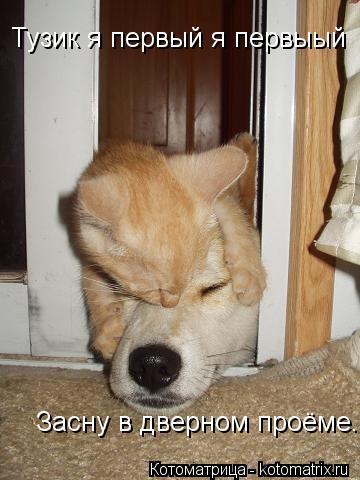 Котоматрица: Тузик я первый я первыый  Засну в дверном проёме...