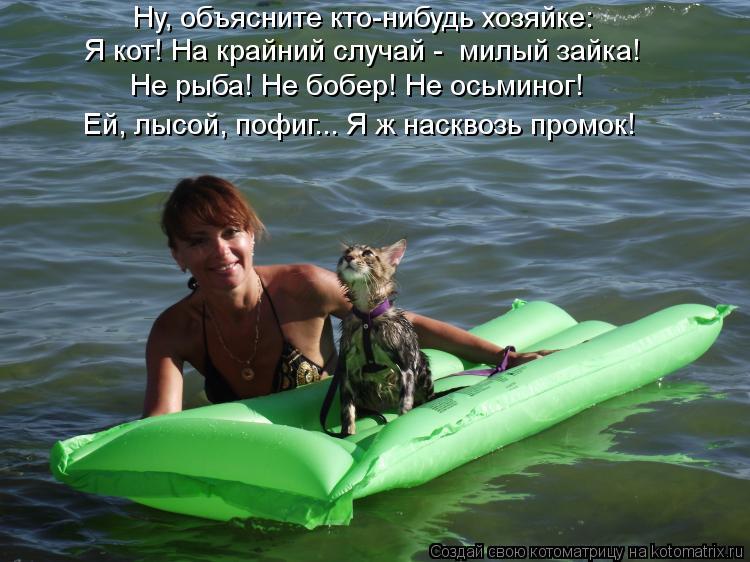 Котоматрица: Ну, объясните кто-нибудь хозяйке: Я кот! На крайний случай -  милый зайка! Не рыба! Не бобер! Не осьминог! Ей, лысой, пофиг... Я ж насквозь промок!
