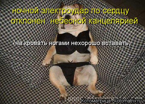 Котоматрица: ночной электроудар по сердцу  отклонен  небесной канцелярией (на кровать ногами нехорошо вставать)