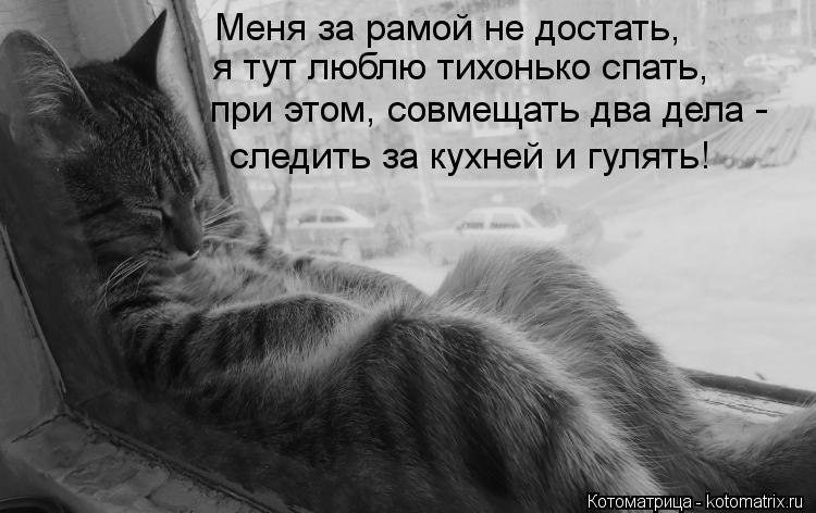 Котоматрица: Меня за рамой не достать, я тут люблю тихонько спать, при этом, совмещать два дела - следить за кухней и гулять!
