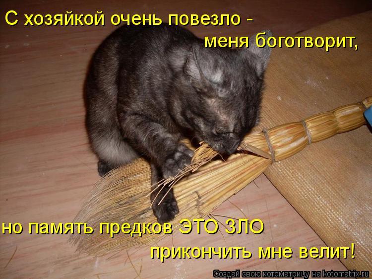 Котоматрица: С хозяйкой очень повезло -  меня боготворит, но память предков ЭТО ЗЛО прикончить мне велит!