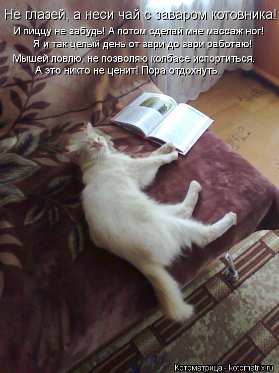 Котоматрица: Не глазей, а неси чай с заваром котовника! И пиццу не забудь! А потом сделай мне массаж ног! Я и так целый день от зари до зари работаю! Мышей л