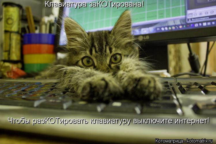 Котоматрица: Клавиатура заКОТирована! Чтобы разКОТировать клавиатуру выключите интернет!