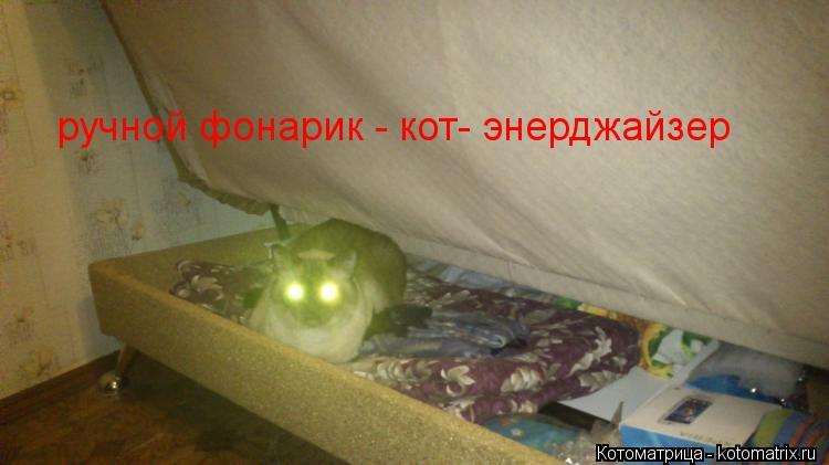 Котоматрица: ручной фонарик - кот- энерджайзер