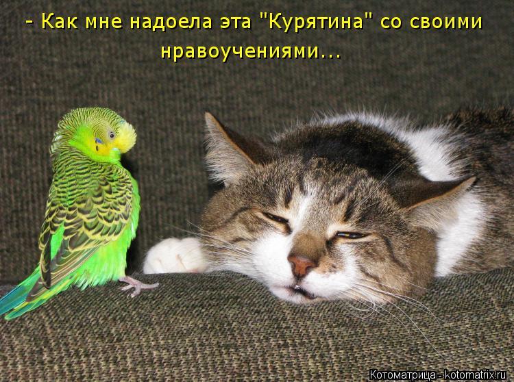 """Котоматрица: - Как мне надоела эта """"Курятина"""" со своими нравоучениями..."""