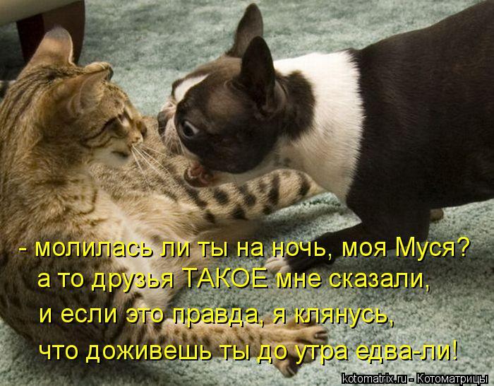 Котоматрица: - молилась ли ты на ночь, моя Муся? а то друзья ТАКОЕ мне сказали, и если это правда, я клянусь,  что доживешь ты до утра едва-ли!